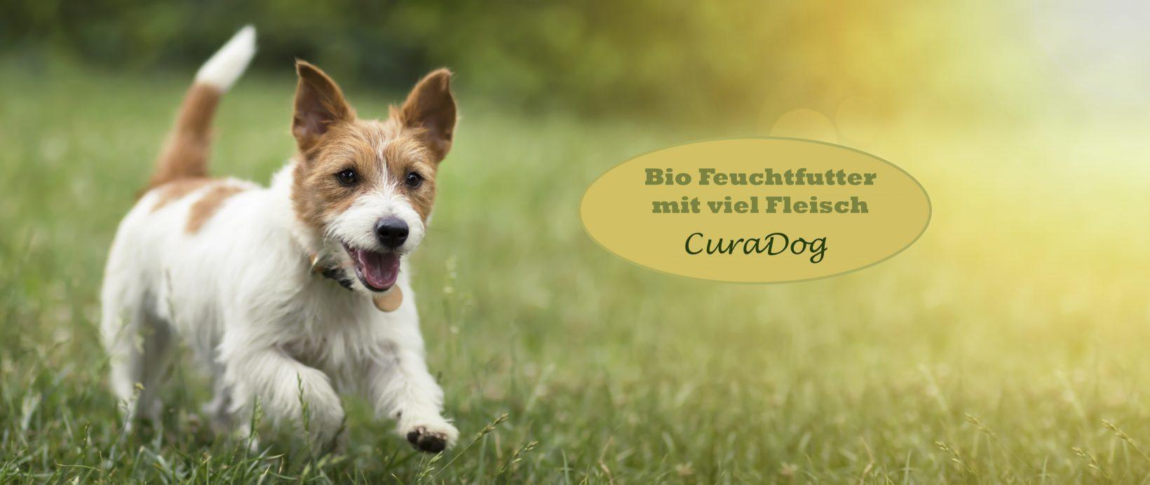 Bio Hundefutter von Reico