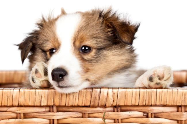 Reico hundefutter maxidogvit