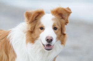 reico hundefutter