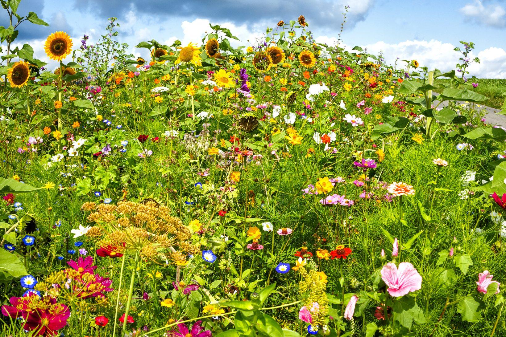 Reico | Umwelt und Nachhaltigkeit