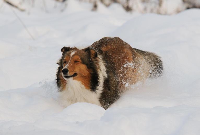 Kräuter zur Unterstützung bei Fellwechsel beim Hund