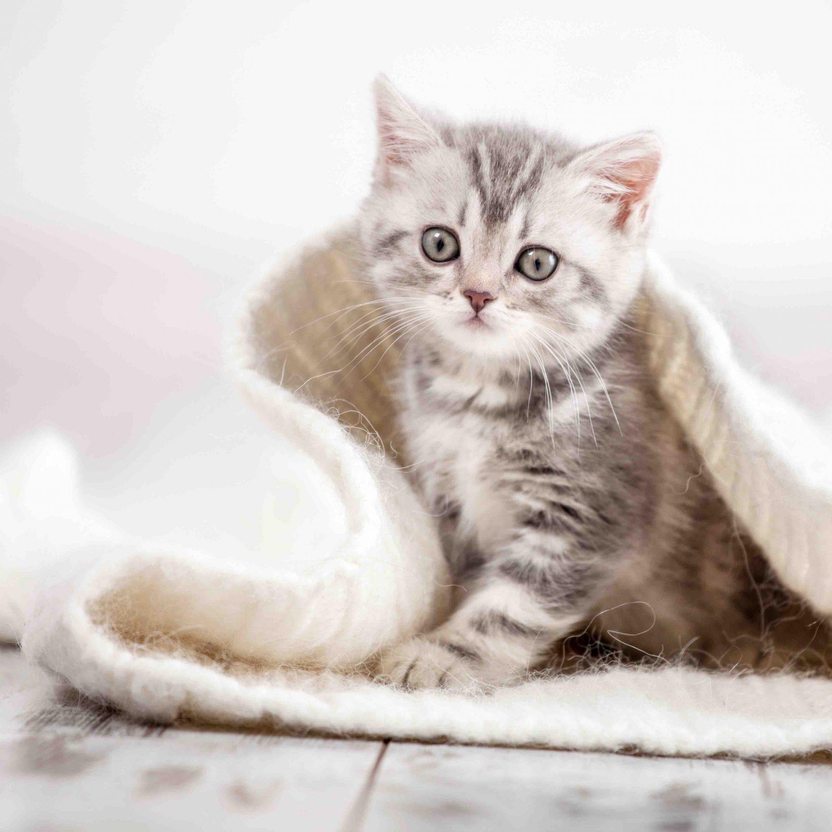gesundes Katzenfutter von Reico MaxiCatVit