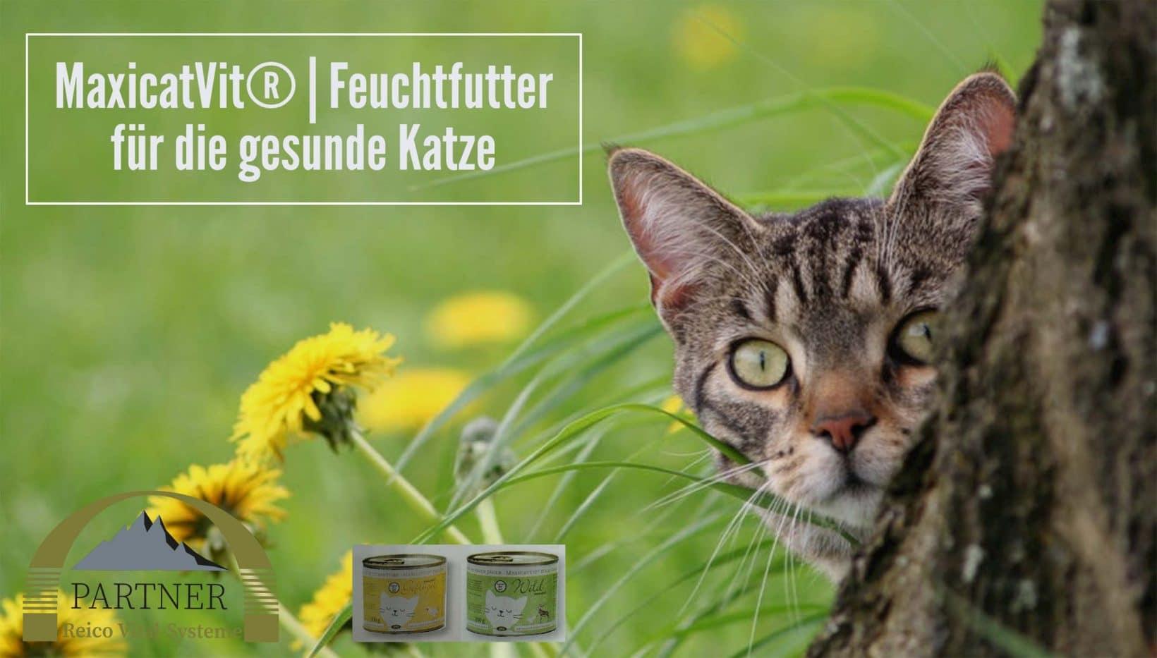 katzenfutter-von-reico-feuchtfutter-katze