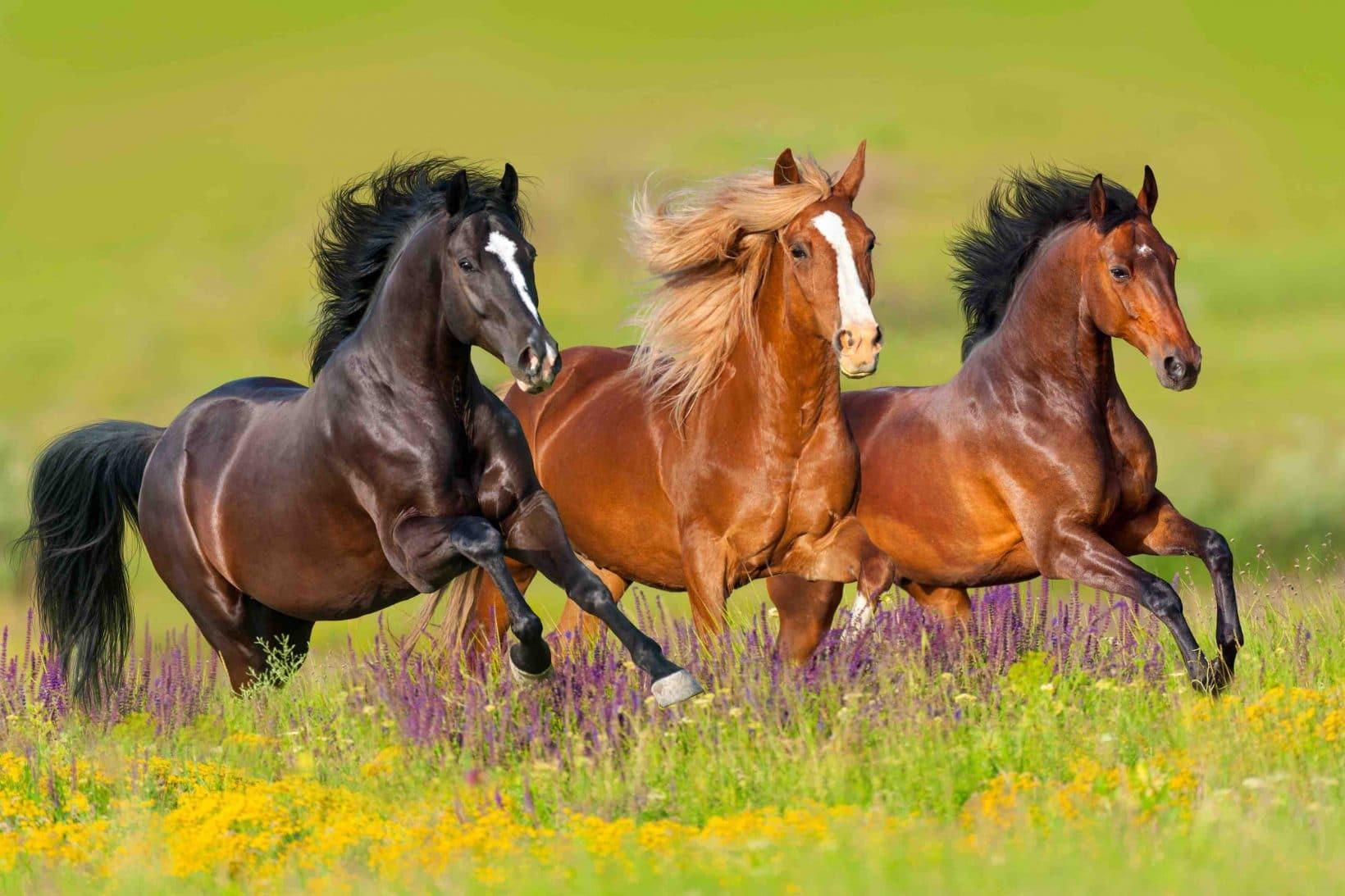 mineralfutter kraeuter für pferde von reico