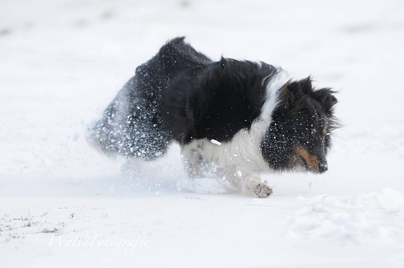 Reico Kräuter Pro 3 gegen Juckreiz beim Hund