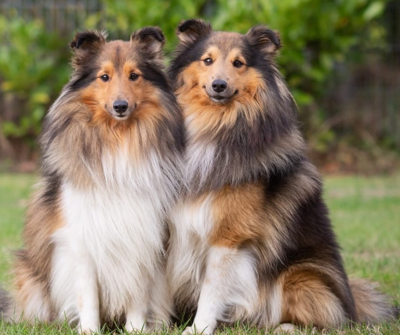 keegan-kalani-reico-hundefutter