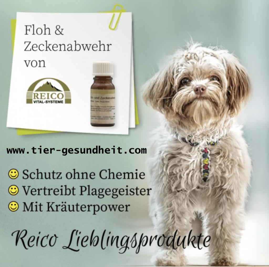 Floh- und Zeckenabwehr von Reico für Hunde