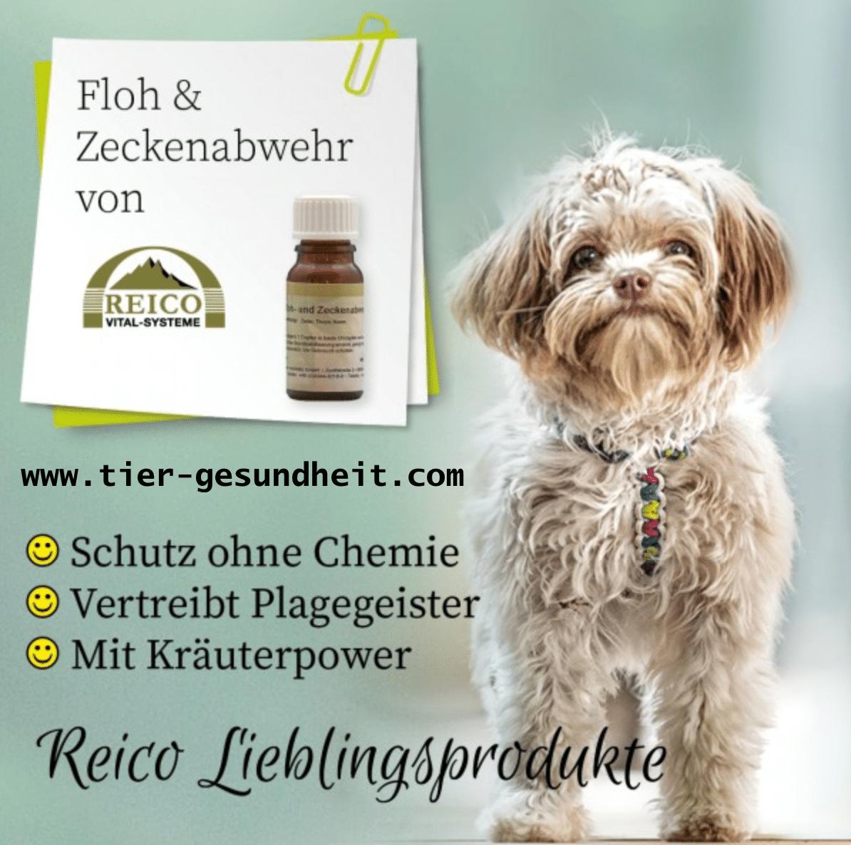 chemiefreies-zeckenabwehr-von-reico-vital-hund-1